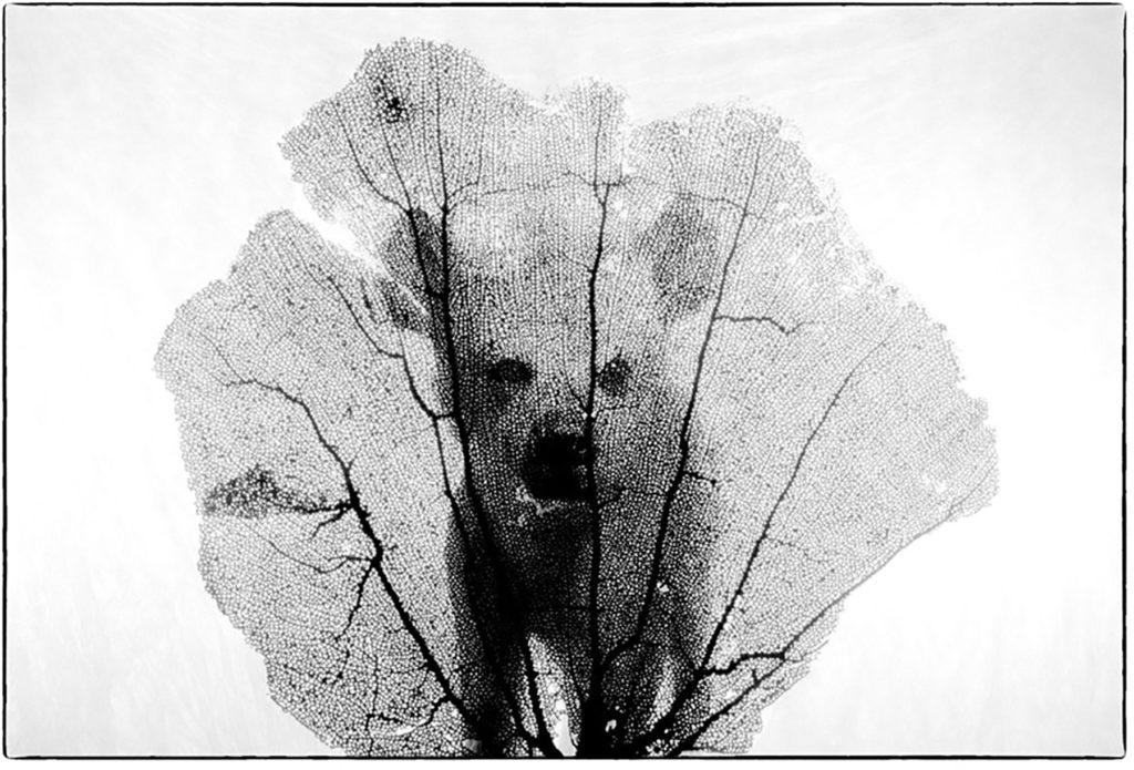 hyène tachetée + évantail de Vénus